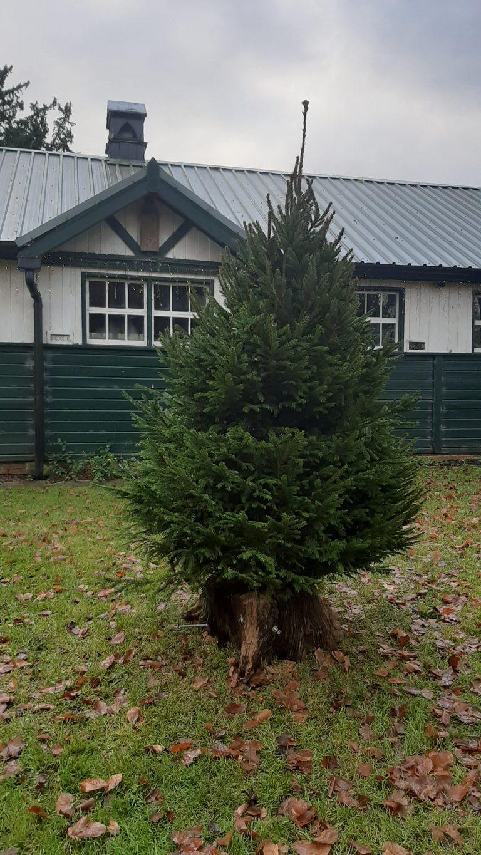 Brent Pelham Christmas Tree